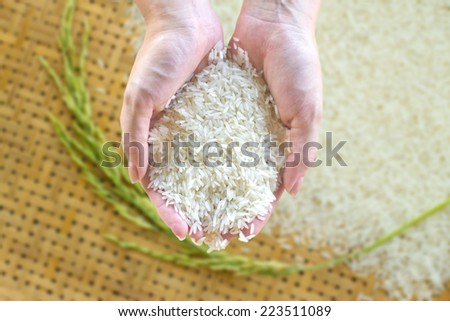 Rice in hand, rice is an important crop in the country. - stock photo