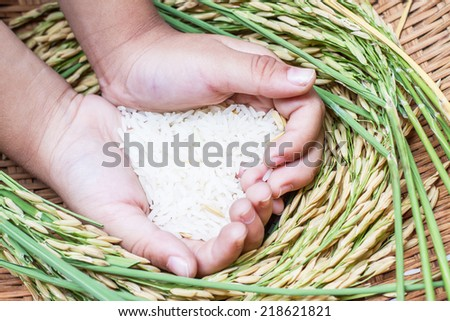 Rice in hand,rice is the most important economic crops in Thailand.  - stock photo
