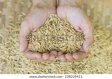 Rice on hand,farmer