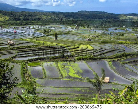 Rice paddies in Bali Indonesia - stock photo