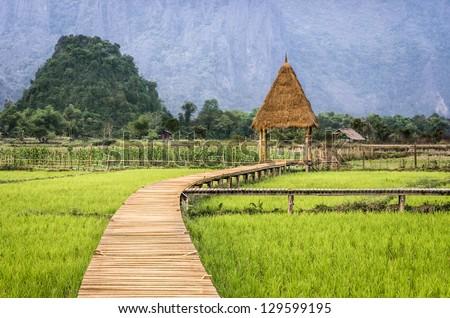 Rice Paddy Field - Walkway to the Hut - stock photo