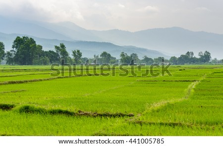 Rice paddy fields in the Dang valley in Terai, Nepal - stock photo