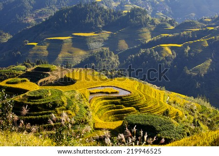 Rice paddy in  autumn,Guilin,Guangxi,China - stock photo