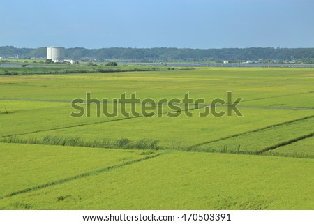 Rice paddy. It's in Inzai-shi, Chiba. The green fields and the open rice paddy are the very comfortable landscape.