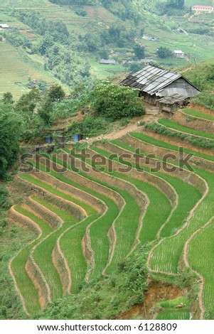 Rice paddy terrace in the mountains - stock photo