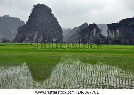 Rice plantations and limestone cliffs in Ninh Binh, Vietnam