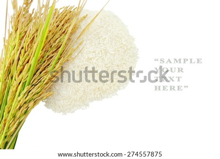 Rice's grains,Ear of rice isolate on white background. - stock photo