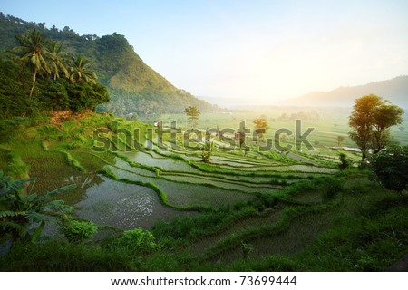 Rice tarrace in mountains. Bali. Indonesia - stock photo