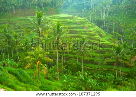 Rice tarrace in mountains on Bali, Indonesia - stock photo