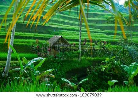 Rice tarrace in mountains on Bali, Indonesia. - stock photo