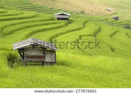 Rice terrace - stock photo