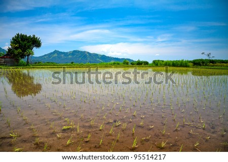 Rice terrace and mountains on - stock photo