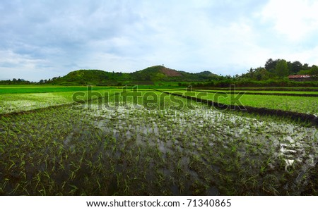 Rice terrace and mountains on a horizon. Indonesia. - stock photo
