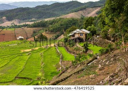 Rice terrace at the north of Thailand.