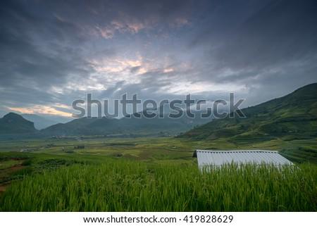 Rice terrace farm in Vietnam. - stock photo