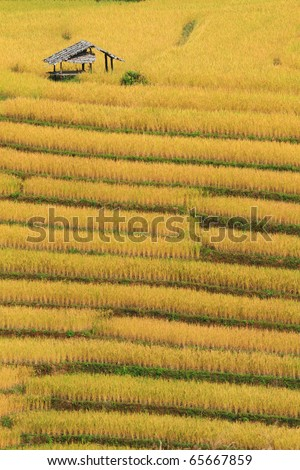 rice terrace fields,thailand