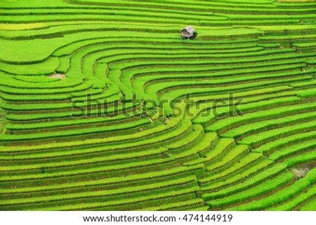 Rice terrace on during sunrise,Vietnam