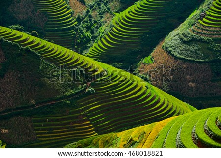 Rice terrace on during sunset ,Northeast region of Vietnam