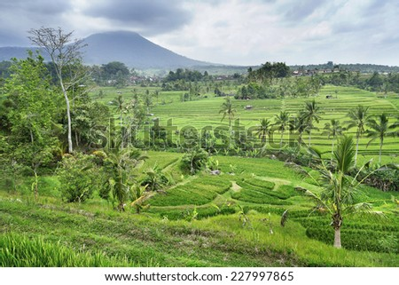 rice terrace on mountain , bali Indonesia - stock photo