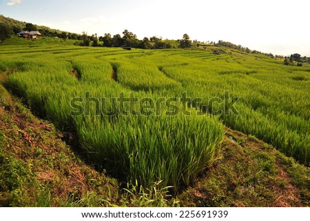 Rice Terraced Fields on the Hills