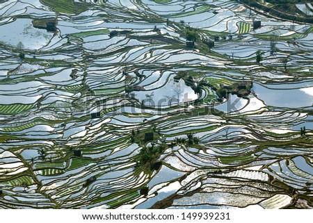 Rice terraces. - stock photo