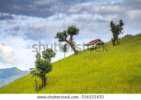 Rice terraces and corn field with have cottages on mountain in  Nan Province, northern of Thailand.