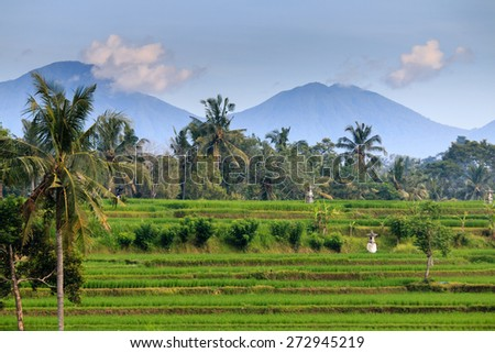 Rice terraces and distant volcanoes on Bali, Indonesia