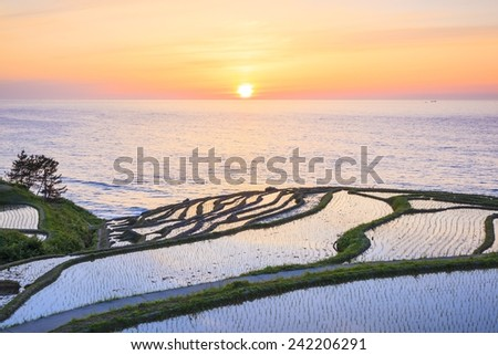 Rice terraces at sunset, Shiroyone senmaida,Ishikawa, Japan - stock photo