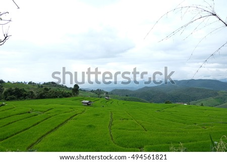 Rice terraces field on mountain in rainy season, Pa Pong Piang Village, Chiang Mai, Thailand