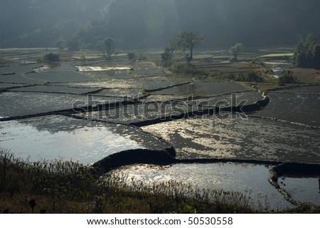 rice terraces filled with water, Burma, Myanmar - stock photo