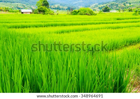 Rice terraces in country, Thailand. - stock photo