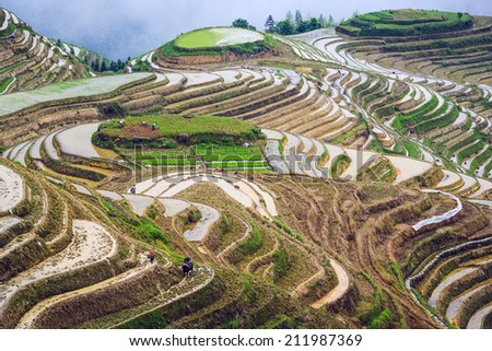 Rice terraces in Guilin, China. - stock photo