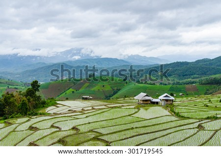 rice terraces in northern thailand - stock photo