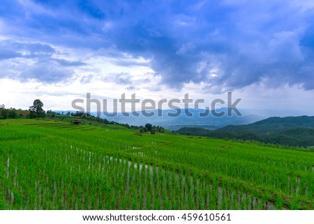 rice terraces in raining day, chiang mai, thailand
