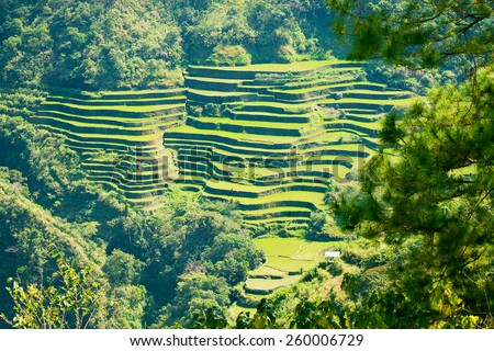 Rice terraces in the Philippines. Rice cultivation in the North of the Philippines, Batad, Banaue. - stock photo