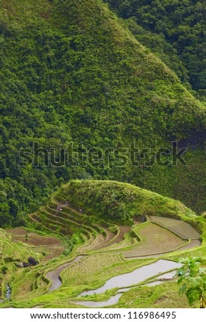 Rice terraces on Philippines mountains, Ifugao region, Batad village