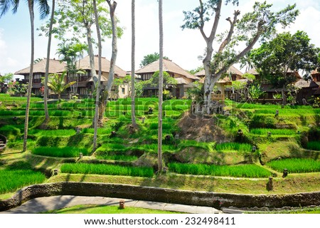 Rice terraces, Ubud, Bali, Indonesia - stock photo