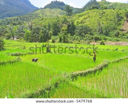Ricefields near Andapa village in Madagascar. - stock photo