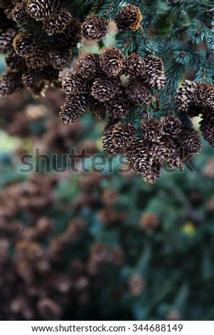 Rich group of pine cones on tree branch in selective focus, vertical image.  Outdoors in sunlight.  Location is along Skyline Drive in Homer, Alaska.  - stock photo