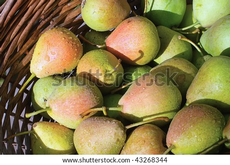 rich harvest. basket with plenty of pear - stock photo