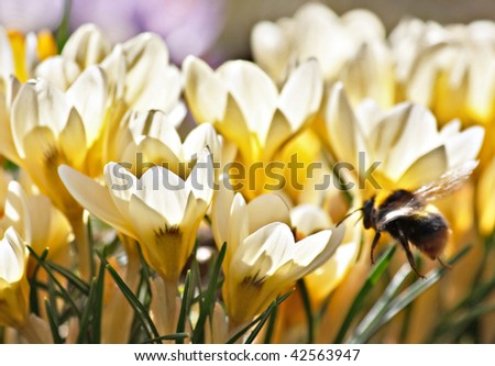 rich spring flowers - stock photo