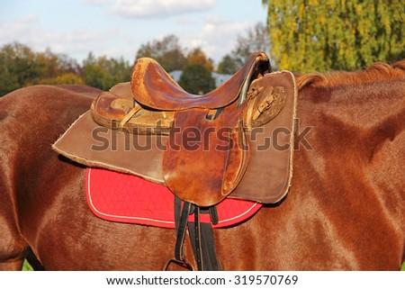 Ridding saddle on a brown horse taken closeup. - stock photo