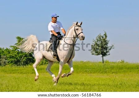 Rider on gray arabian horse in the field - stock photo