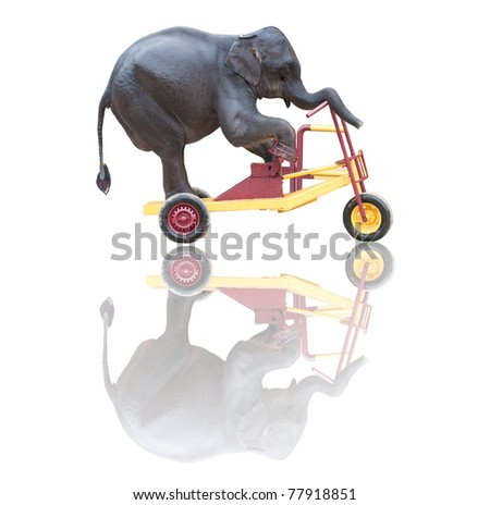 rider on the storm, elephant riding a bicycle isolated on white - stock photo