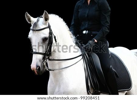 rider on white arab - stock photo
