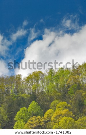 ridgetop in great smoky mountains in spring with puffy clouds and blue sky in background