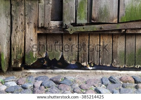 Riga. In the centre of the old town. Cats live in an abandoned house. - stock photo