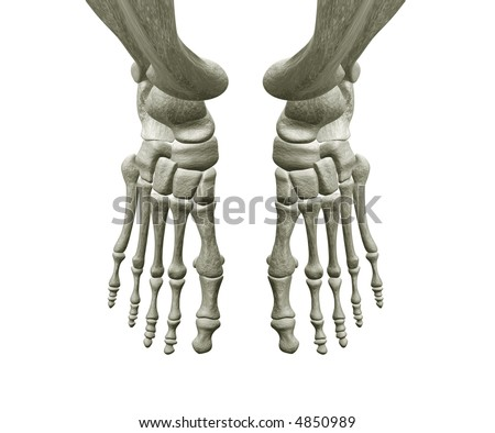 Right and Left Foot Bones - stock photo