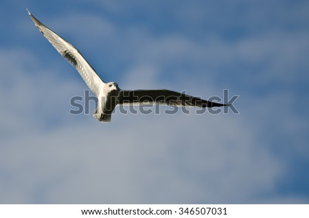 Ring-Billed Gull Flying in a Cloudy Blue Sky