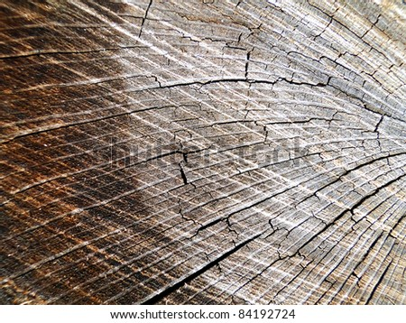 Rings of a Log - stock photo